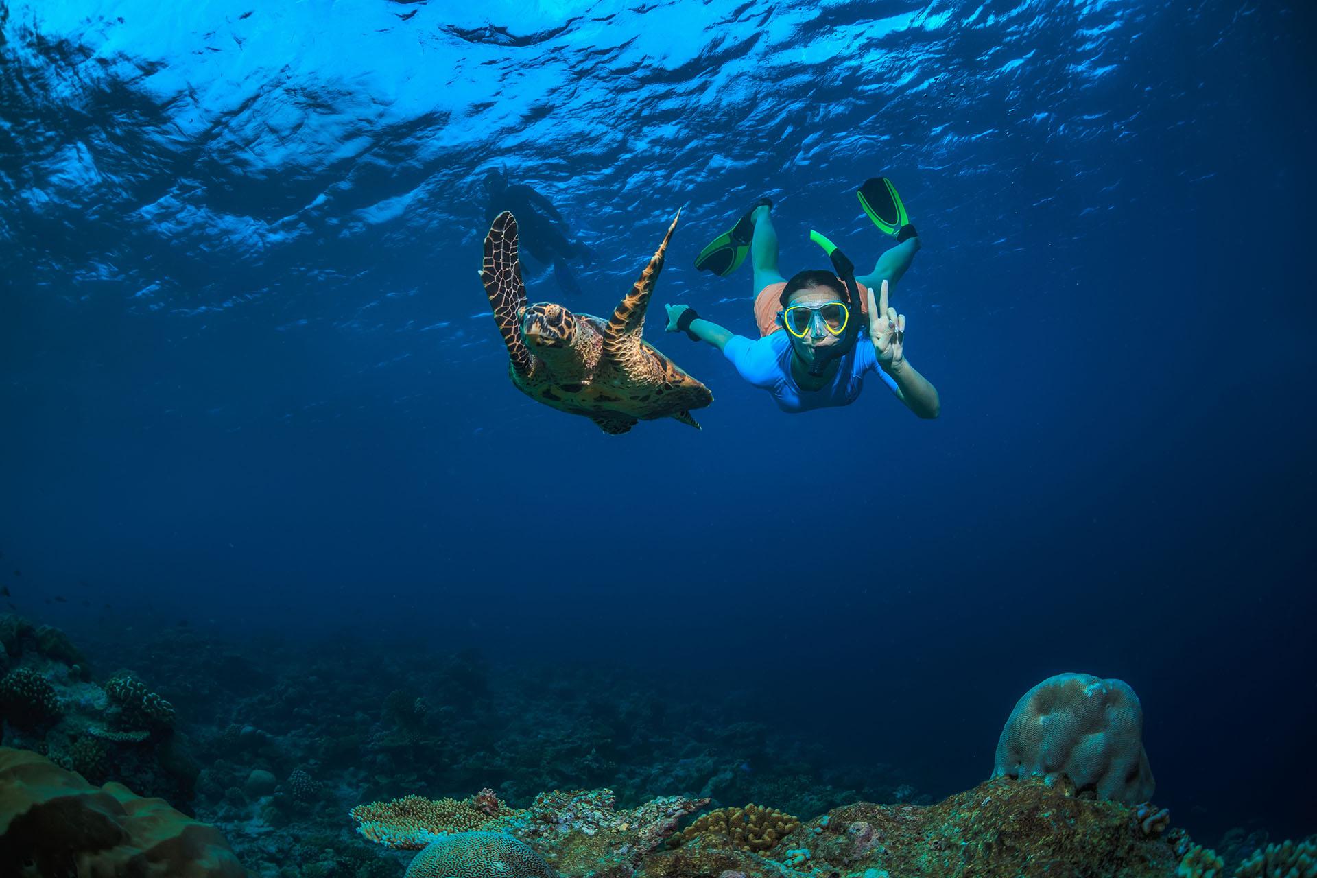 snorkeling and sailing tour